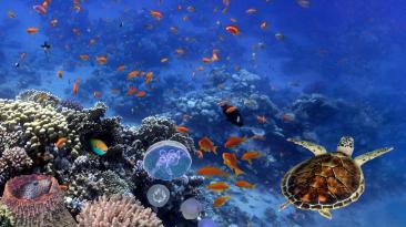 International Ocean Film Festival